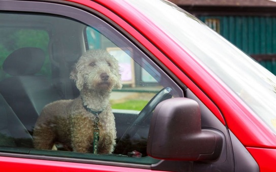 Steer clear of 'hot dogs' as temperatures soar, says GEM Motoring Assist